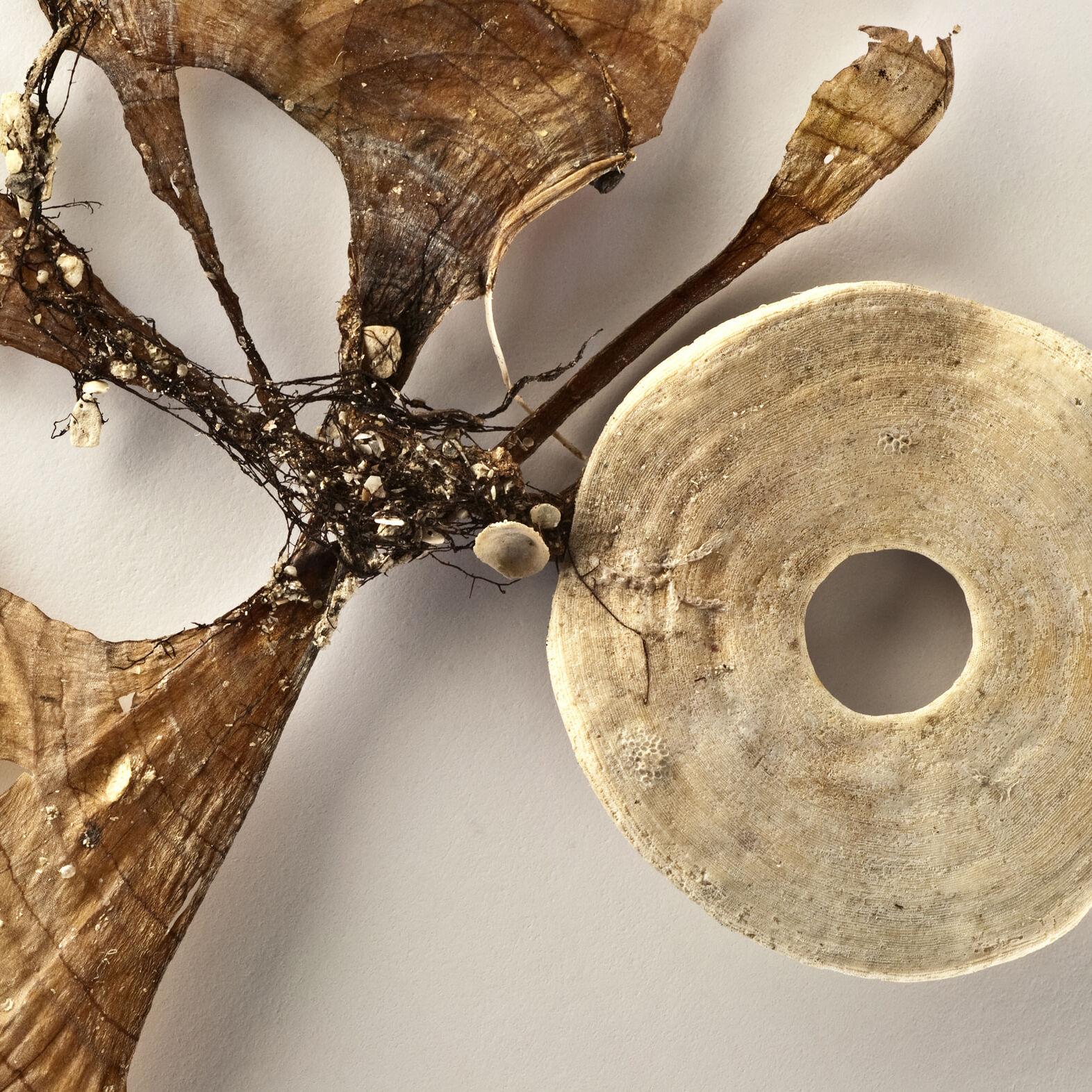 Tethered III (foraminifera) by Catherine Hewitt